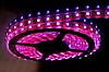 Светодиодная лента 12V smd5050 ІР20 розовый 60led