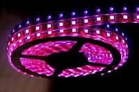 Светодиодная лента 12V smd5050 ІР20 розовый 60led, фото 1