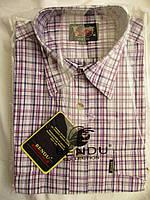 Мужская рубашка короткий рукав купить в Одессе (р.39-46) №6579-1