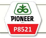 Семена кукурузы П8521 Pioneer