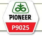 Семена кукурузы П9025 Pioneer
