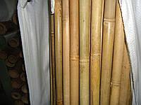 Тонкинский бамбук, д.14-16мм, L 1,5м