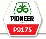 Семена кукурузы П9175 Pioneer