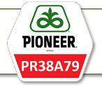 Семена кукурузы ПР38А79 Pioneer