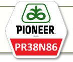 Семена кукурузы ПР38Н86 Pioneer