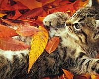Рекомендации на осень
