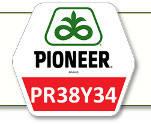 Семена кукурузы ПР38И34 Pioneer