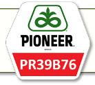 Семена кукурузы ПР39Б76 Pioneer