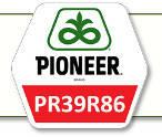 Семена кукурузы ПР39Р86 Pioneer