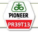 Семена кукурузы ПР39Т13 Pioneer