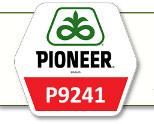 Семена кукурузы П9241 Pioneer