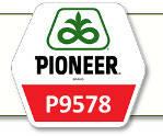 Семена кукурузы П9578 Pioneer