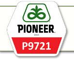 Семена кукурузы П9721 Pioneer