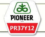 Семена кукурузы ПР37И12 Pioneer