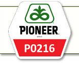 Семена кукурузы П0216 Pioneer