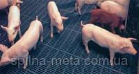 Щелевые пластиковые полы для содержания свиней