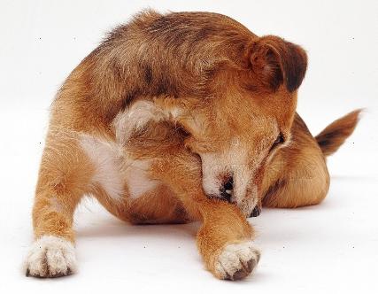 Инструмент для удаления клещей у собак и кошек Rolf Club 3D