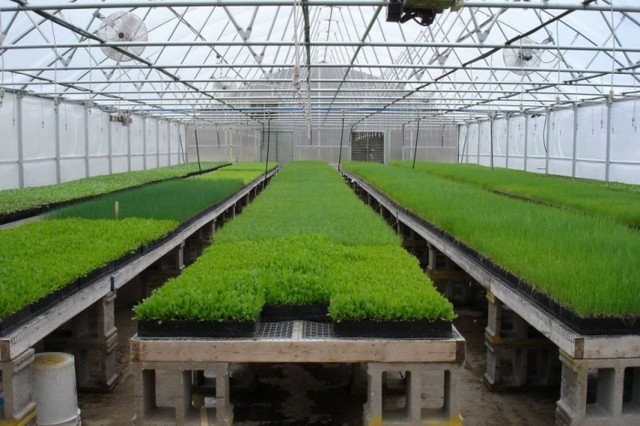 вирощування в теплиці