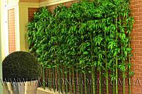 Бамбук искусственный 230 см изгородью