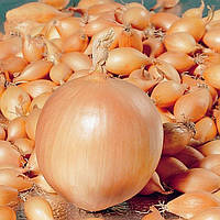 Лук- севок озимый Корадо 0,5 кг TOP Onion