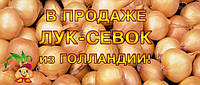 Озимый лук-севок