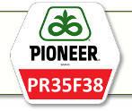 Семена кукурузы ПР35Ф38 Pioneer
