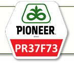 Семена кукурузы ПР37Ф73 Pioneer