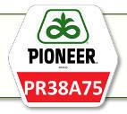 Семена кукурузы ПР38А75 Pioneer