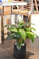 Искусственное растение Спатифилиум 100 см
