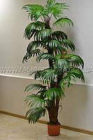 Искусственная трехствольная веерная пальма 200 см