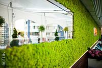 Природа поруч: облаштування систем озеленення