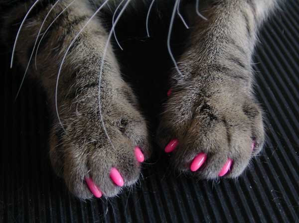 Накладки для когтей кошек