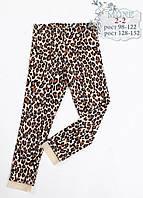 Лосины (леопард) тм МОНЕ р-ры 104,110,116