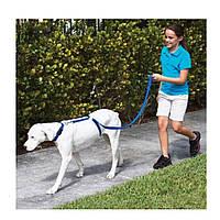 Поводок Для Собак The Instant Trainer Leash более 30 кг, фото 1