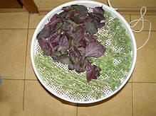 Электросушилка для овощей и фруктов бытовая «Ротор» (20л., 5 секций), фото 3