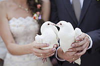 Живые голуби. Запуск живых голубей, фото 1