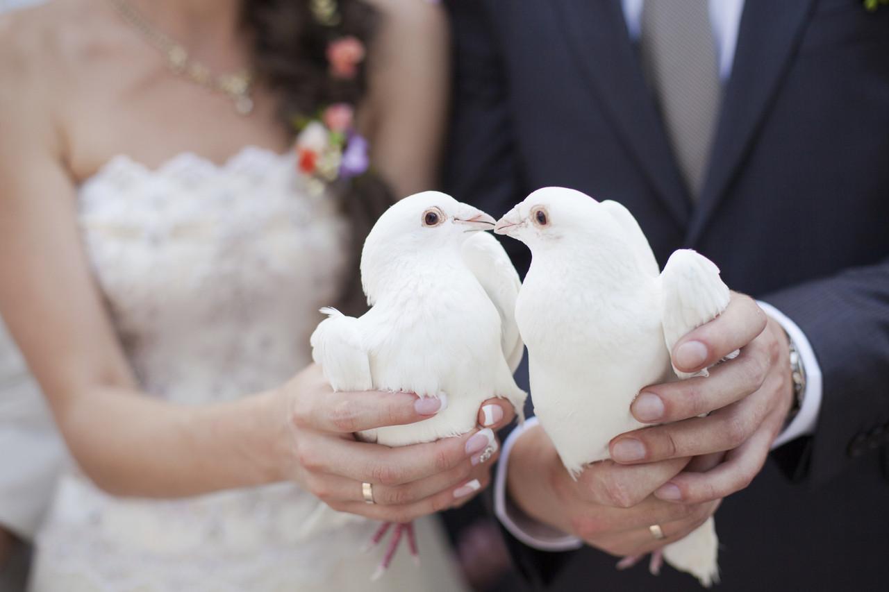 Живые голуби. Запуск живых голубей