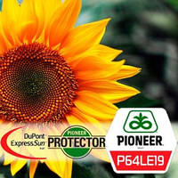 Семена подсолнечника П64ЛЕ19 (P64LE19) Pioneer