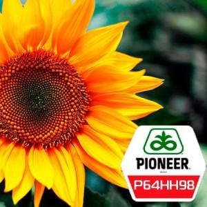 Семена подсолнечника П64ГГ98 (P64HH98) Pioneer