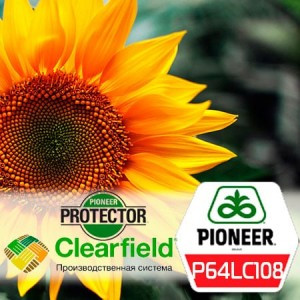 Семена подсолнечника П64ЛЦ108 (P64LС108) Pioneer