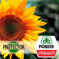 Семена подсолнечника ПР64А71 (PR64A71) Pioneer