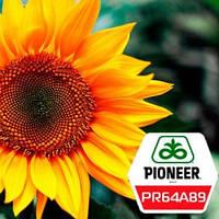 Семена подсолнечника ПР64А89 (PR64A89) Pioneer