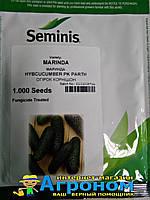 Семена огурца Маринда F1, 1000 семян (Seminis), Семинис, Голландия