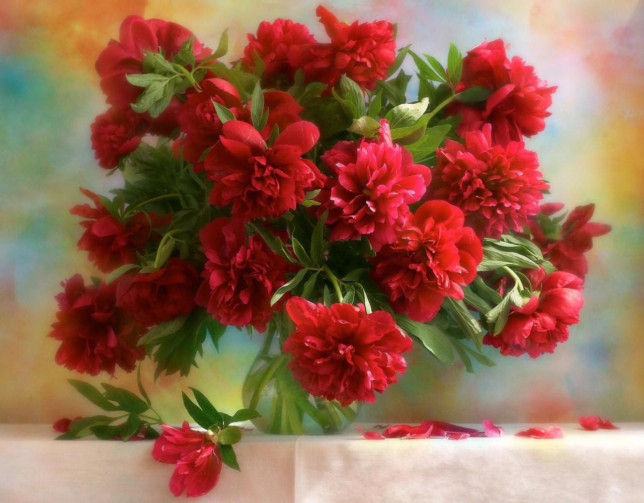 Картина по номерам «Идейка» (КН1133) Красные пионы (Дарья Никончук), 50x40 см