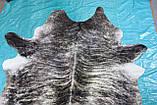 Екзотична шкіра темно-сіра в Одесі, фото 3