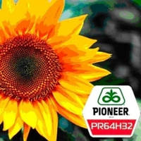 Семена подсолнечника ПР64Г32 Пионер (PR64H32 Pioneer)
