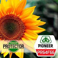 Семена подсолнечника ПР64Ф66 Пионер (PR64F66 Pioneer)