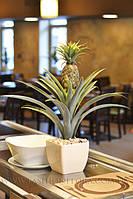 Искусственное растение Ананас
