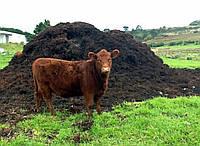 Перегной  коровий, навоз ,органическое удобрение