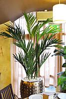 Искусственная пальма  Areka premium 250 см